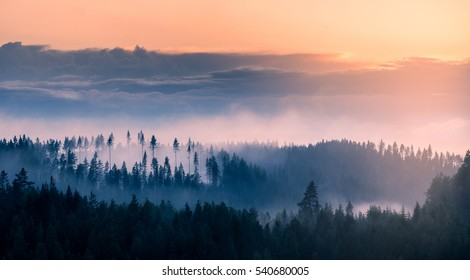 Dramatic, misty landscape at sunset. The mist is rising from the forest as a result of recent, heavy rainfall and cooling of air after sunset. Taken in Finland from observation tower.
