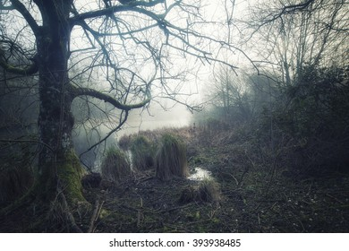 Dramatic moody foggy forest landscape Spring Autumn Fall