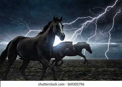 Dramatic nature background - running black horses, bright lightning in dark stormy sky
