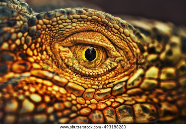 Dramatic processing photo in gold toning - close up photo eye reptile