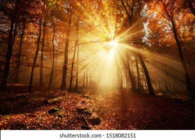 Dramatic scenery in a forest on a misty autumn day, with silhouettes of trees and the rays of sunlight warming the color of the fog
