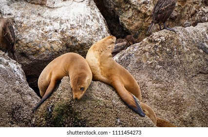 dramatic sea lion