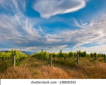 Dramatic Sky Above an Organic Vineyard in Marlborough area New Zealand