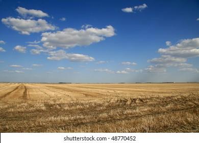 dramatic sky over prairie farm field