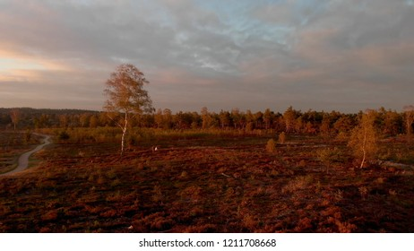 Dramatic sky over a sunset lit landscape of moorland with a birch tree beside a pathway disappearing in the distance