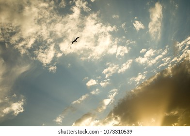 dramatic sky with seagul