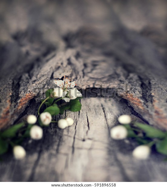 Dramatic Spring flowers on a rustic wooden background. Blurred space for text.