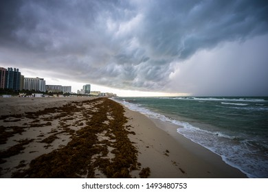 Dramatic stormy weather view of South Beach with an infestation of sargassum seaweed washed up on the empty shore in Miami, Florida, USA