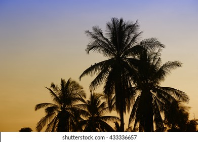Dramatic stunning morning light sunset and Silhouetted of coconut tree in low light photography.