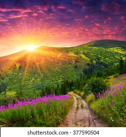 Dramatic summer scene in the mountains. Sunrise in the Carpathians with blooming beggars-ticks flowers. Ukraine, Europe.