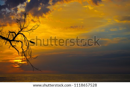 Dramatic Sunrise. A crow on a barren tree silhouetted against orange and blue sky during sunrise.