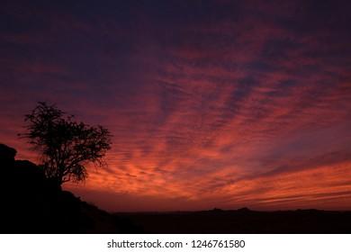 dramatic sunrise in Sahara desert with lonesome tree