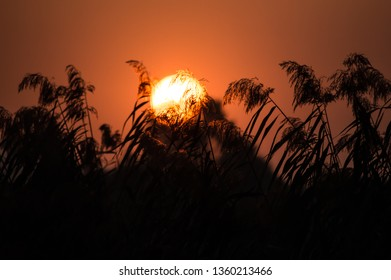 Dramatic sunset with clear sky and reed silhouettes