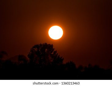 Dramatic sunset with clear sky and tree silhouettes