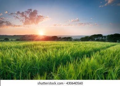 Dramatic sunset over fields of ripening barley near West Taphouse in Cornwall