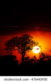 Dramatic sunset over the forest in Kruger National Park, showing vibrant colors