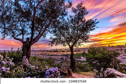 Dramatic sunset over Jerusalem, through the olive trees of Mount of Olives