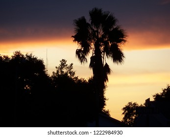 Dramatic Sunset with purple sky and palm tree