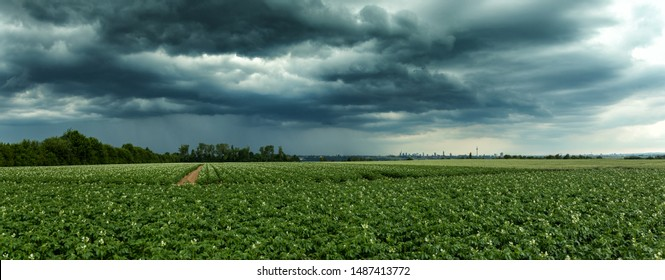 Dramatic thundercloud over a wheat field wih the city of Frankfurt in the distance, Germany
