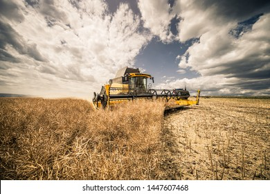 Dramatic wide angle shot of modern yellow combine harvesting canola during summer in Czech Republic South Moravia. Agricultural machine harvester working in the field with blue sky and white clouds.