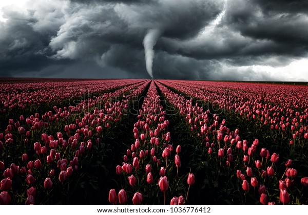 Dramatik sky with Tornado and red tulip field