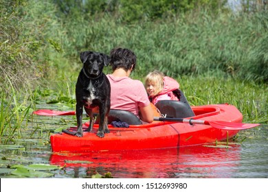 Drawa National Park - Canoeing on the Drawa River - Dog in kayak, traveling with a dog - Poland