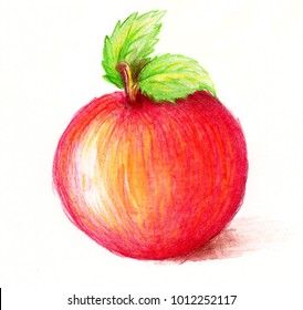 Drawing of apple. Watercolor and pencil art. Bright colors, over white