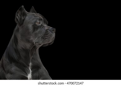 Drawing dog breed Cane Corso portrait on a black background