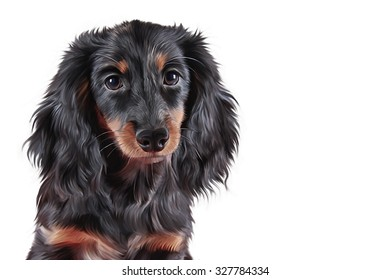 Drawing Dog breed dachshund, portrait on white background