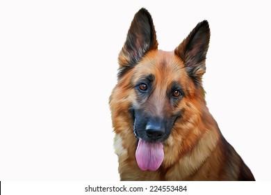Drawing of the dog German Shepherd Dog