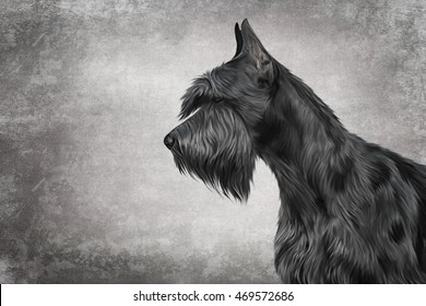 Drawing  Dog Giant Schnauzer portrait oil painting on old vintage color grunge paper background