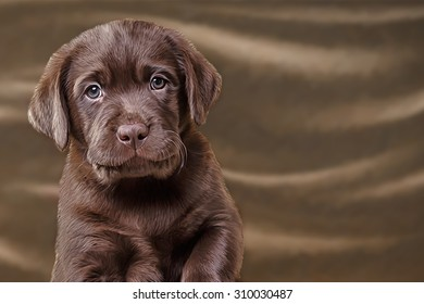 Drawing dog, puppy Labrador, portrait on a color background