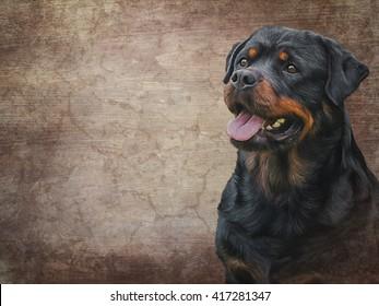 Drawing of the dog rottweiler, tricolor, portrait on old vintage color grunge paper background