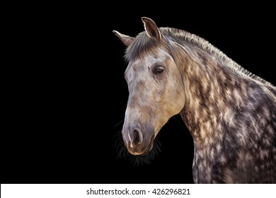 Drawing  Horse portrait on a black background