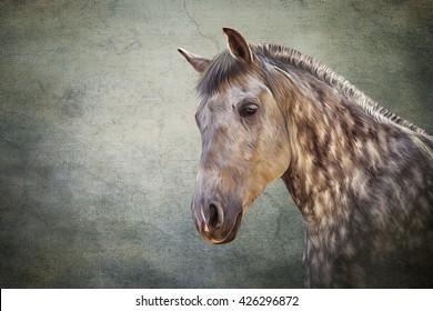 Drawing  Horse portrait on old vintage color grunge paper background
