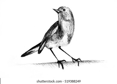 Drawing of hummingbird. Illustration