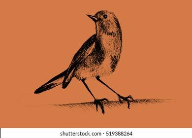 Drawing of hummingbird. Illustration