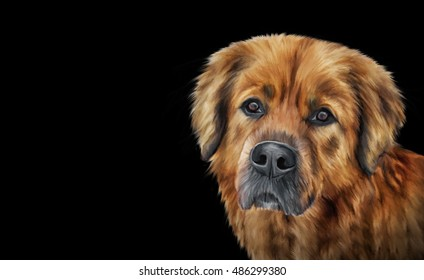 Drawing, illustration brown mongrel dog portrait on a black background. Hand drawn home pet. Clip art illustration. Greeting card design.