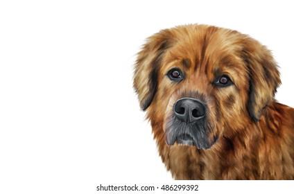 Drawing, illustration brown mongrel dog portrait on a white background. Hand drawn home pet. Clip art illustration. Greeting card design.