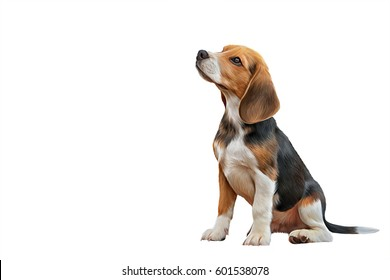 Drawing, illustration Dog Beagle portrait oil painting on a white background. Hand drawn home pet. Digital painting.  Clip art llustration
