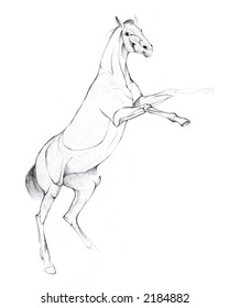 drawing illustration of a horse