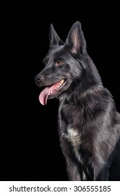 Drawing Mixed breed dog in nature, portrait on a black background