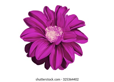 Drawing oil painting dahlia flower on white background