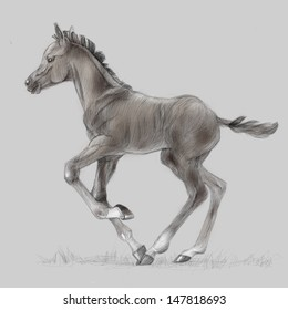 Drawing portrait of running foal.