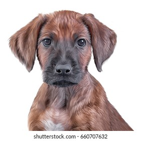 Drawing puppies Rhodesian Ridgeback portrait oil painting on a white background. Hand drawn home pet. Digital painting.