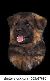 Drawing puppy German Shepherd Dog portrait on a black background