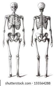 Drawing skeleton, isolated on white
