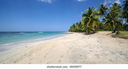Dream beach with coconut palm trees, ocean and blue sky