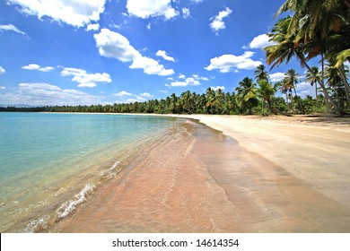 Dream beach paradise with coconut palm trees