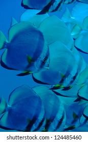 a dream in blue